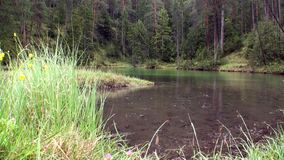 Chova no lago da montanha do verde de Fernsteinsee em Fernpass em Nassereith Áustria video estoque