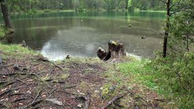 Chova no lago da montanha do verde de Fernsteinsee em Fernpass em Nassereith Áustria filme