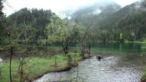 Chova no lago da montanha do verde de Fernsteinsee em Fernpass em Nassereith Áustria vídeos de arquivo