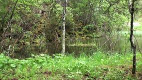 Chova no lago verde da floresta em Fernpass em Nassereith Áustria filme