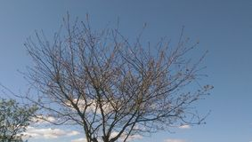 chover Fotografia de Stock Royalty Free