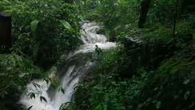 Chover na selva