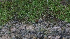Chover na terra video estoque