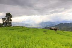 Chover no campo verde do terraço do arroz e no céu nebuloso fotografia de stock royalty free
