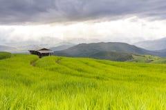 Chover no campo verde do terraço do arroz e no céu nebuloso fotos de stock royalty free