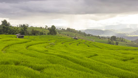 Chover no campo verde do terraço do arroz e no céu nebuloso fotos de stock