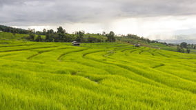 Chover no campo verde do terraço do arroz e no céu nebuloso imagens de stock royalty free
