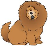 Chow. This illustration depicts a Chow Chow dog breed Royalty Free Stock Photography
