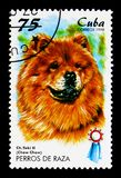 Chow-Chow (Canis lupus familiaris), Dogs serie, circa 1998. MOSCOW, RUSSIA - MARCH 28, 2018: A stamp printed in Cuba shows Chow-Chow (Canis lupus familiaris) royalty free stock photo