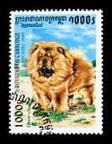 Chow-Chow Canis lupusfamiliaris, hundkapplöpningserie, circa 1997 Royaltyfri Foto