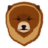 Chow chow avatar. Isolated avatar of a chow chow. Dog breeds. Vector illustration design Royalty Free Stock Photography
