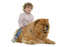 Chow chow and boy royalty free stock photo