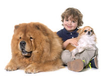 Chow chow, chihuahua and little boy Stock Photo
