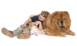 Chow chow, chihuahua and little boy Royalty Free Stock Photos