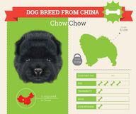 Chow Chow Dog breed  infographics set. Royalty Free Stock Images