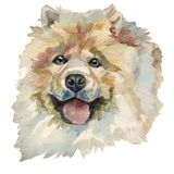 The Chow Chow Dog, watercolor hand painted dog portrait. The Chow Chow Dog. Hand painted, isolated on white background watercolor dog portrait royalty free illustration