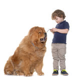 Chow chow dog and little boy Royalty Free Stock Image