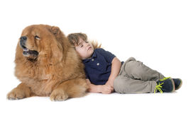 Chow chow dog and little boy Stock Photography