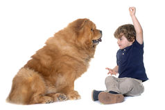 Chow chow dog and little boy Stock Images