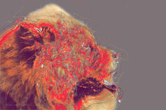 Chow Chow dog portrait. Abstract artwork Royalty Free Stock Images
