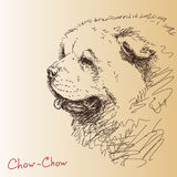 Chow-chow dog. Vector sketch stock illustration