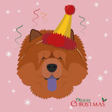 Chow Chow dog wearing a party hat in Christmas Stock Image