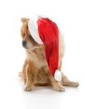 Chow-Chow in einem roten Weihnachtsmann-Hut Lizenzfreies Stockfoto