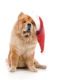 Chow-chow en un sombrero rojo de Papá Noel Fotografía de archivo libre de regalías