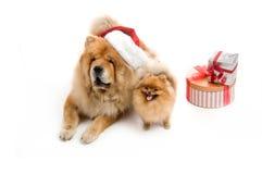 Chow-chow en un sombrero y un perro de Pomerania rojos de Papá Noel, Foto de archivo