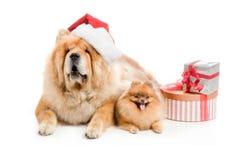 Chow-chow en un sombrero y un perro de Pomerania rojos de Papá Noel, Fotos de archivo