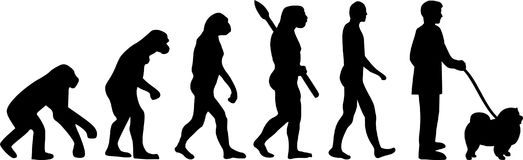 Chow-chow evolution. With dog silhouette Stock Image