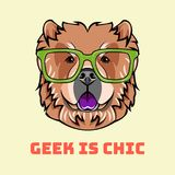 Chow chow geek. Smart glasses. Clever dog. Dog breed. Dog portrait. Vector. Chow chow geek. Smart glasses. Clever dog. Dog breed. Dog portrait. Vector stock illustration
