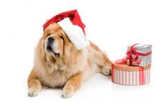 Chow-Chow i en röd Santa Claus hatt Royaltyfri Foto