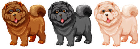 Chow Chow. Illustration of a set of chow chow Royalty Free Stock Images