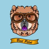 Chow Chow Pilot. Dog aviator. Dog portrait. Dog breed. Vector. Chow Chow Pilot. Dog aviator. Dog portrait. Dog breed. Vector illustration Stock Photo
