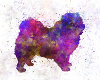Chow-chow in Watercolor Royalty Free Stock Images