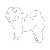 Chow linear dog. Domestic pet friend in line style. Vector illustration Stock Photography