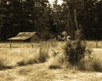 chowana łąka Zdjęcie Royalty Free