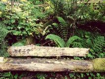 Chowana ławka Zdjęcia Stock