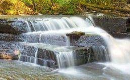 Chowani spadki w Spokojnym lesie Zdjęcie Stock