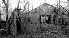 Chowany oparzenie w lesie fotografia stock