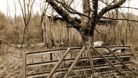 Chowany oparzenie w lesie Obraz Royalty Free