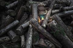 Chowany strach na wróble pod drzewnymi bagażnikami fotografia royalty free
