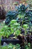 Chowany tajny ogród w jesieni Obraz Stock