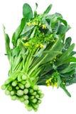 choy λαχανικό ποσού Στοκ Φωτογραφία