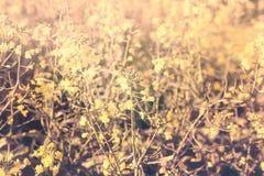 Choy Bok, van de de zachtheidsstijl van de chinesskool de plantaardige aard backgr Royalty-vrije Stock Afbeeldingen