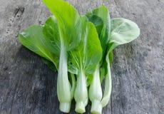 Choy Gemüse Bok auf dem hölzernen Hintergrund stockfotografie