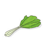 Choy sum. Is often eaten in soups and stir-fried dishes Stock Image
