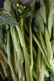 Choy Sum, van het Kantonese woord` Hart van de Groente royalty-vrije stock afbeelding
