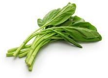 Choy suma, chiński warzywo Zdjęcie Stock